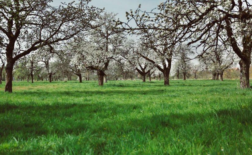 Profiter des produits bio en Bretagne
